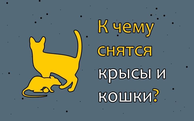 Сон видеть во сне крысу и кошку thumbnail
