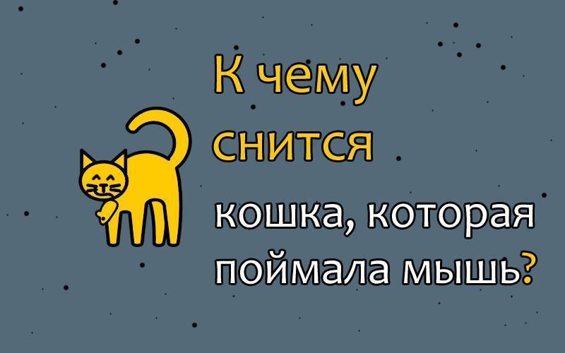 К чему снится кошка, поймавшая мышь — толкование сна по 41 соннику